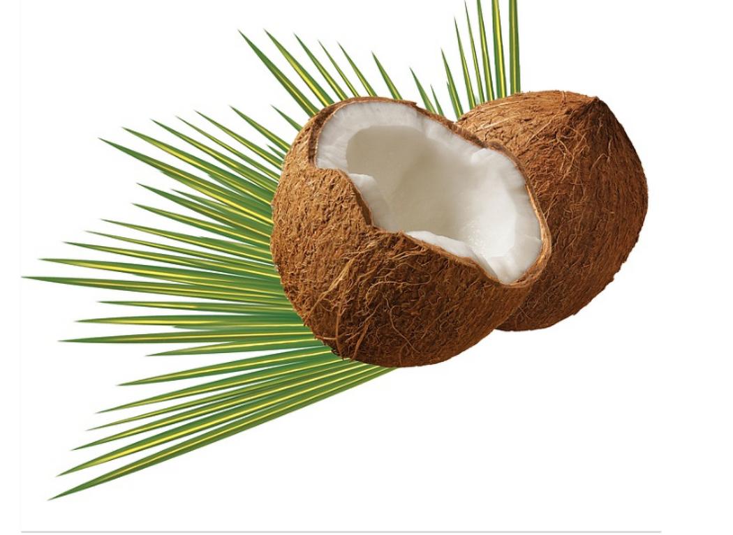 치매예방에 효과적인 코코넛오일의 효능과 섭취방법