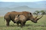 인도네시아 가이드: 수마트라 코뿔소