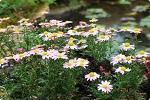 우리들꽃의 다양한 변신 야생화 작품 전시회