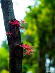 초여름 단풍나물 이파리에 놀러온 가을
