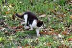 올림픽공원 포식자 고양이