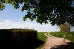 Le champ de blé au corbeaux