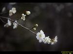 범어사 산책길의 봄소식