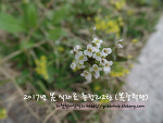 2017년 봄 식재료 총정리2탄 (봄 중턱편)