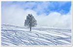 한겨울에 보는 겨울풍경 사진
