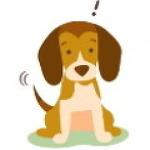 반려견 강아지 간단한 건강 체크 코, 귀, 털로 쉽게 알아보자.