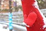 [덕수궁 돌담길] 눈 내린 덕수궁 돌담길 # 나무, 겨울 옷을 입다 # 정동길 2017