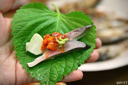 전어의 계절, 초보자도 전어를 맛있게 먹는 방법