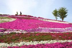 [경남 산청] 생초국제조각공원 꽃잔디 축제