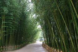 [울산가볼만한곳]팬더 나올것 같은 태화강대공원 십리대숲 ,태화루,태화십리대밭 먹거리 단지