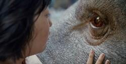 영화 옥자-GMO(유전자변형 생물체)와 반려 동물 사이