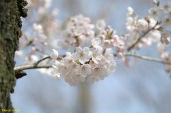 서울대공원에서 찍은 꽃사진