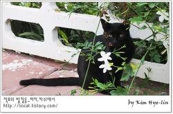 [적묘의 터키]카쉬,검은 고양이의 포스 혹은 긴장소심모드
