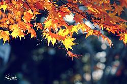 경단이 하늘을 날다. 이와테 겐비케이 하늘을 나는 경단