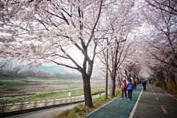 봄다운 봄날, 꽃다운 꽃날.