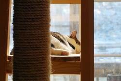 평온한 낮잠시간