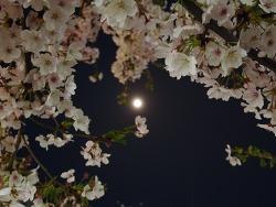 밤 벚꽃 (2017.04.09) / 성북천