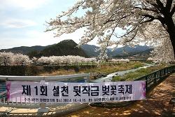 [전북 무주] 무주벚꽃, 설천 뒷작금 벚꽃축제
