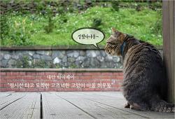 [대만 청춘 여행] 핑시선 따라 도착한 고즈넉한 고양이 마을 허우통