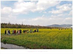 부산 4월 가볼만한곳 대저생태공원 유채꽃축제