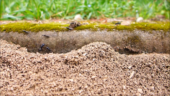 [20160423]안양에는 국내 최대 개미제국이 있다