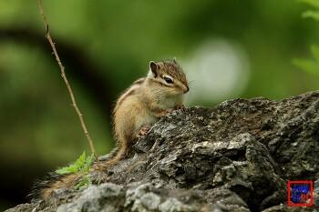 대구수목원의 요정, 귀요미 다람쥐를 만나다.