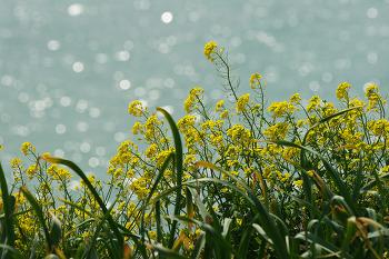 [소니 알파 온라인 아카데미] 봄꽃을 더욱 아름답게 촬영하는 방법