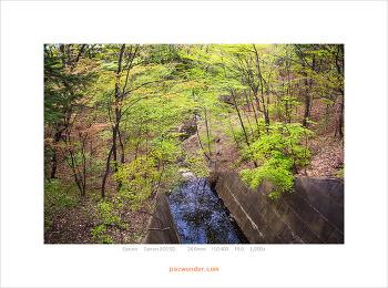 [5D] 숲속에서