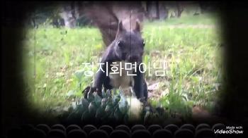 [남이섬 / 영상] 설모의 식사시간!