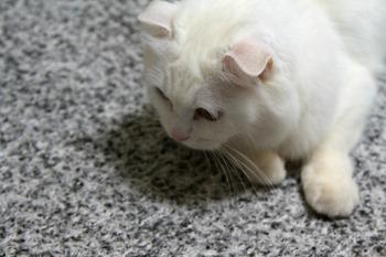 혼자 늙게 해서 미안하다 고양이.