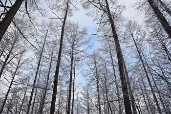 [89번째 산행] 겨울! 태백산으로 떠나는 황홀한 눈꽃산행