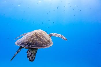 [RX와 함께 하는 세계여행] 사이판의 투명한 바다에서 숨을 쉬다