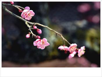 통도사의 꽃바람...♥♡♥