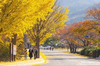 경주 통일전 은행나무, 남아있는 가을의 끝을 붙잡다