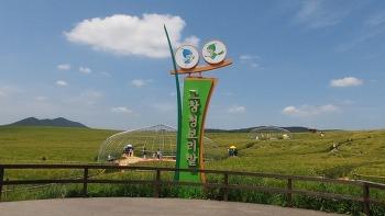 [고창여행]누렇게 익어가는 학원농장 고창청보리밭 풍경