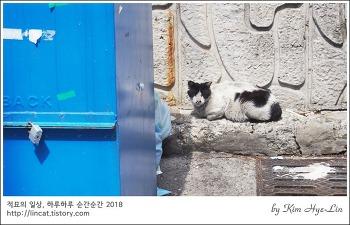 [적묘의 고양이]주차장,무단침입,동냥을 주지 않을 바엔 쪽박이나 깨지 말라