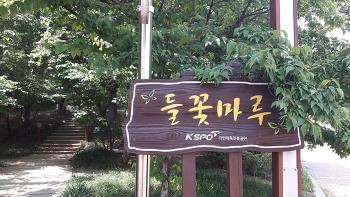 2018 올림픽공원 들꽃마루의  양귀비와 수레국화.