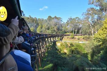 [호주여행] <토마스기차>의 모티브가 된 증기기관차, 멜버른 퍼핑빌리