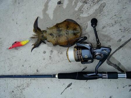 무늬오징어 에깅낚시 이제 시작이다! - Cuttlefish Eging fishing