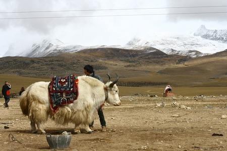 [모집] 영혼 울림 있는 티베트에서 대자연과 호흡하자 10박11일