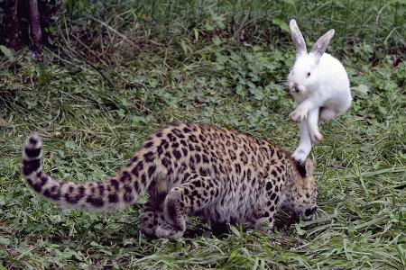 토끼의 뿔과 거북의 털을 찾다, 그리고 '쉬는 날..