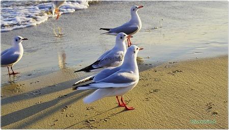 봄이 오는 해변의 부산갈매기