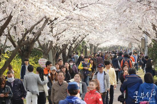 다가오는 봄, 부산 3월 축제 행사 달력