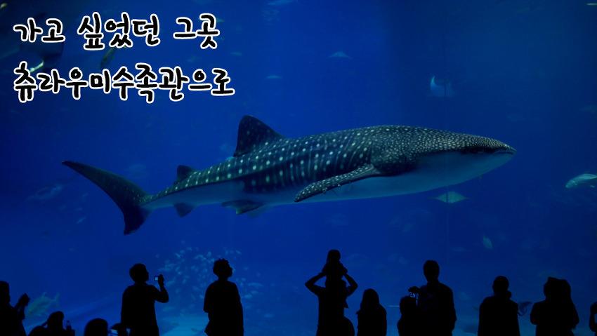 오키나와가족여행, 고래상어 보러 츄라우미수족관을 가다