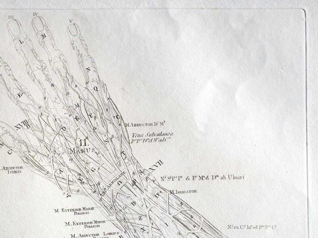 아이패드 의학 역사 해부학 필사본 워커도서관 Medica