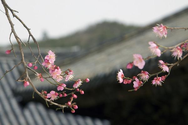 봄꽃여행, 매화꽃 따라 남쪽나라 출사여행!