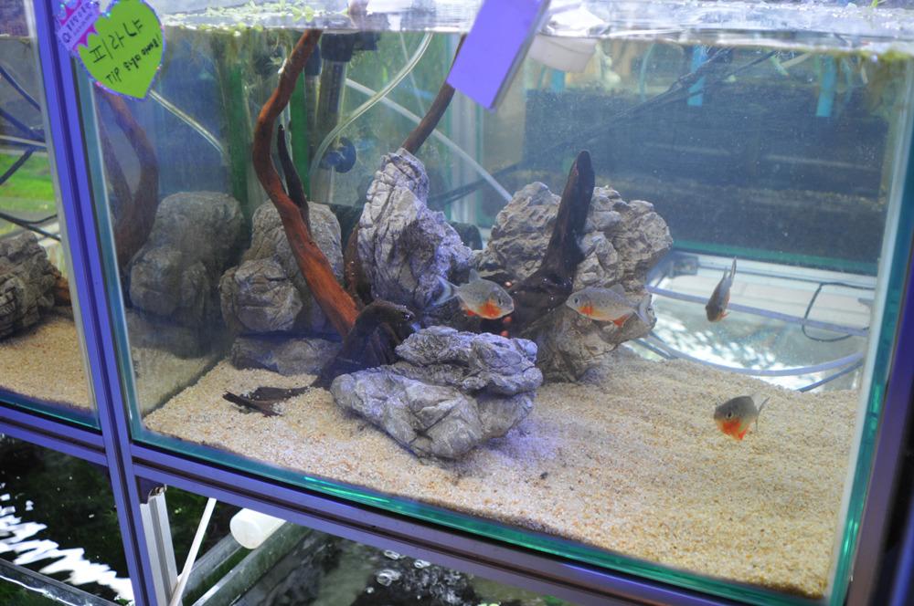 Blue Top Aquarium