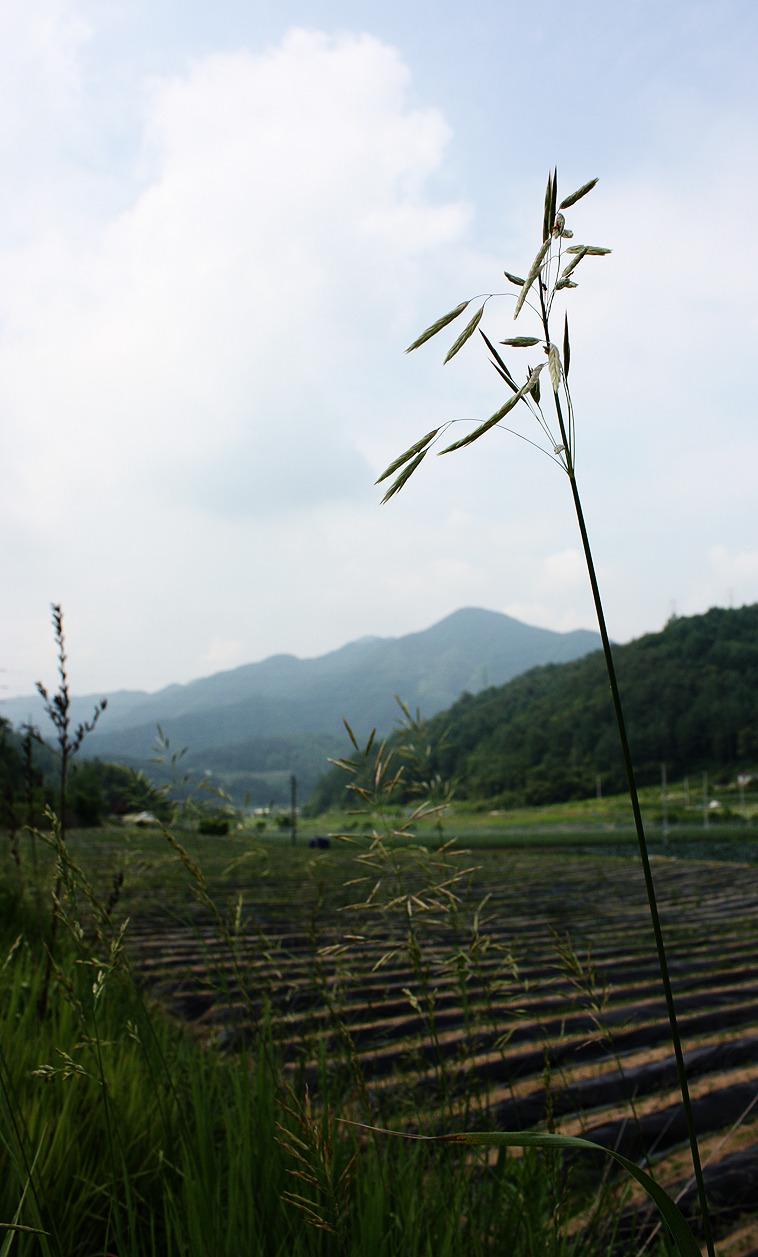 제천 약초마을