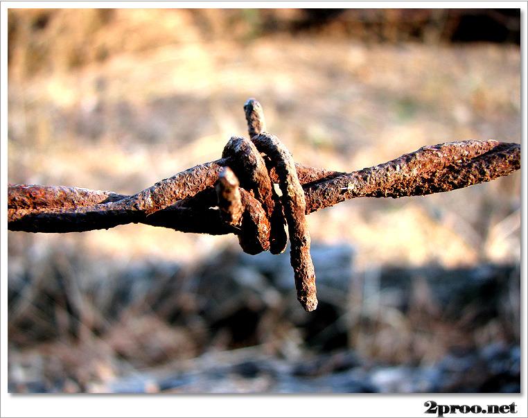 철조망 가시 사진
