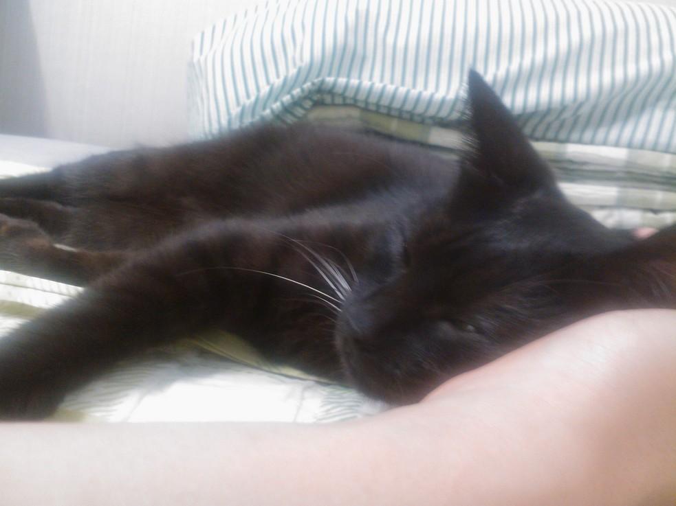손 베고 자고 있는 위카